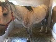 лошади конь